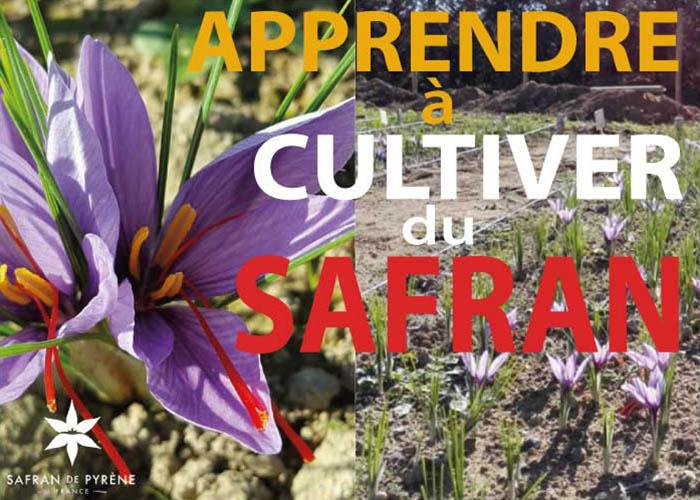 Logo Journées Culture du Safran