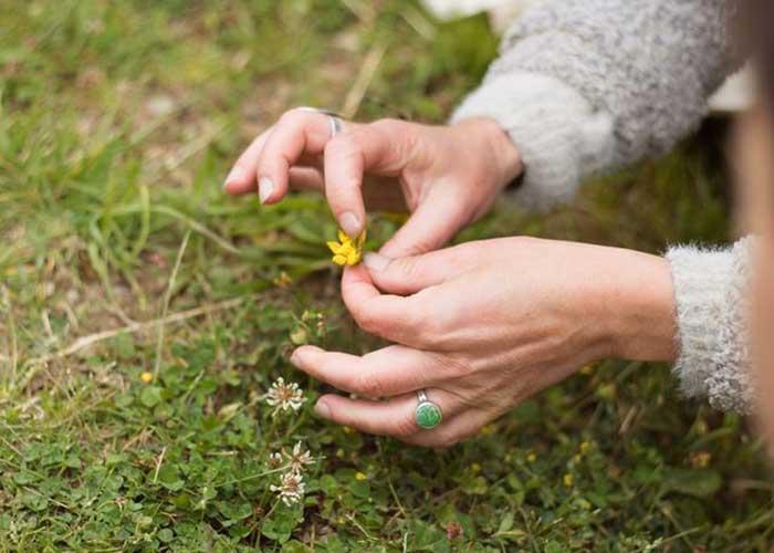 Découverte des plantes sauvages commestibles et médicinales