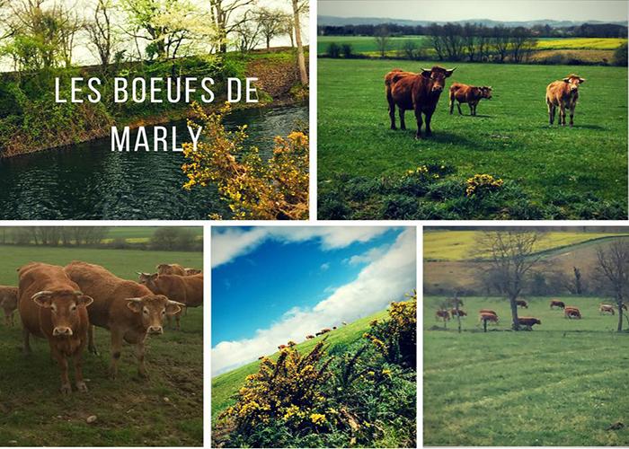 Logo LES BOEUFS DE MARLY